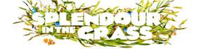 Splendour in the Grass Festival, Queensland